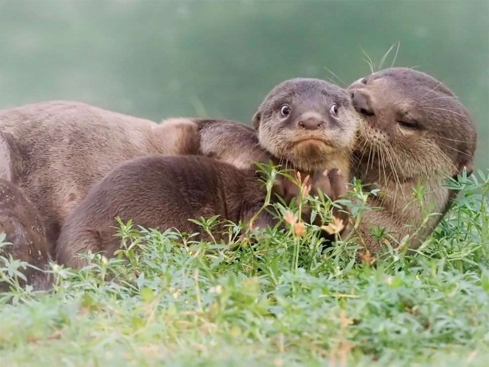 Hilarious Finalists of Comedy Wildlife Photography Awards 2020