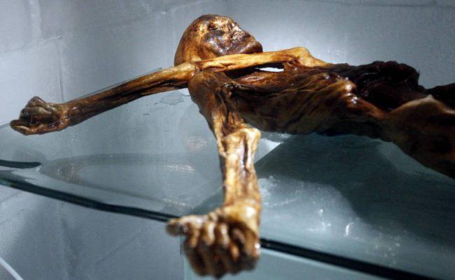 Ötzi 's body on display in the South Tyrol Museum of Archeology in Bolzano